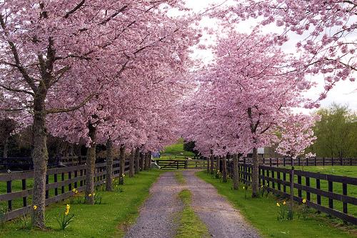 عکس طبیعت بهار